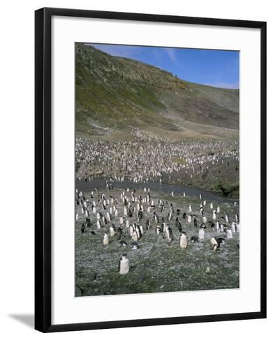 Chinstrap Penguins at Baily Head, Deception Island, Antarctica, Polar Regions-Geoff Renner-Framed Art Print
