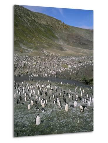 Chinstrap Penguins at Baily Head, Deception Island, Antarctica, Polar Regions-Geoff Renner-Metal Print
