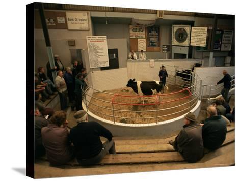 Skibbereen Cattle Auctions, County Cork, Munster, Eire (Republic of Ireland)-Gavin Hellier-Stretched Canvas Print