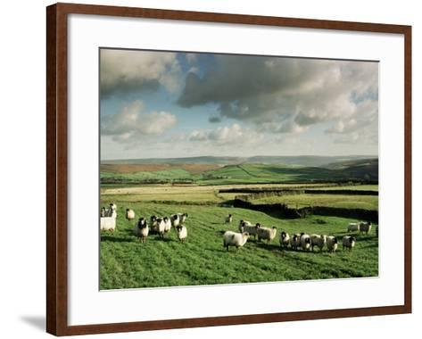 Sheep on Abney Moor on an Autumn Morning, Peak District National Park, Derbyshire, England-David Hughes-Framed Art Print