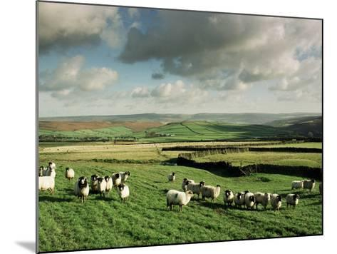 Sheep on Abney Moor on an Autumn Morning, Peak District National Park, Derbyshire, England-David Hughes-Mounted Photographic Print
