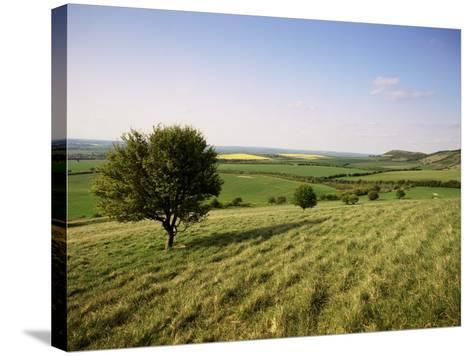 Ivinghoe Beacon from the Ridgeway Path, Chiltern Hills, Buckinghamshire, England-David Hughes-Stretched Canvas Print