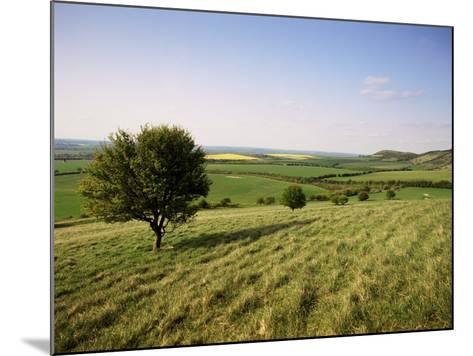 Ivinghoe Beacon from the Ridgeway Path, Chiltern Hills, Buckinghamshire, England-David Hughes-Mounted Photographic Print
