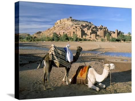 Camels by Riverbank with Kasbah Ait Benhaddou, Unesco World Heritage Site, in Background, Morocco-Lee Frost-Stretched Canvas Print