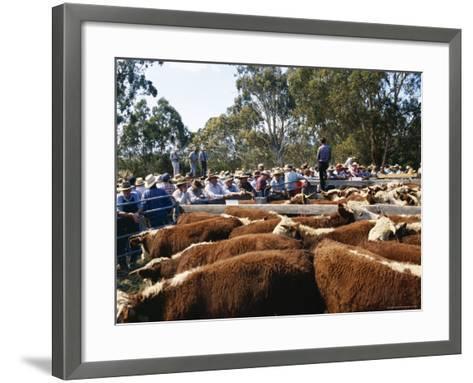 Cattle Sale in Victorian Alps, Victoria, Australia-Claire Leimbach-Framed Art Print