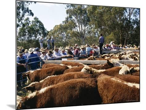 Cattle Sale in Victorian Alps, Victoria, Australia-Claire Leimbach-Mounted Photographic Print