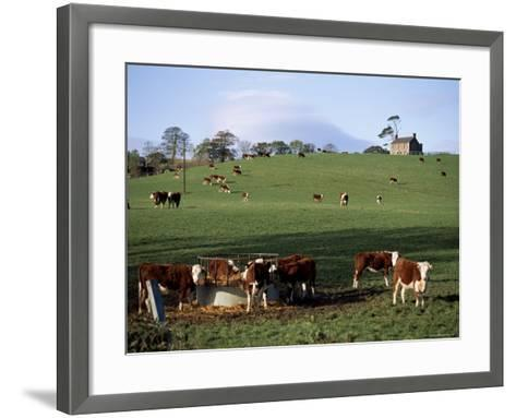 Cattle, South of Bray, County Wicklow, Leinster, Eire (Republic of Ireland)-Michael Short-Framed Art Print