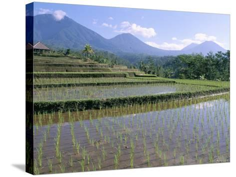 Rice Paddy Fields in Centre of the Island, Bali, Indonesia, Southeast Asia-Bruno Morandi-Stretched Canvas Print