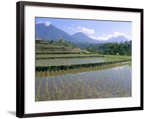 Rice Paddy Fields in Centre of the Island, Bali, Indonesia, Southeast Asia-Bruno Morandi-Framed Art Print