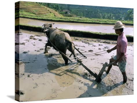 Farmer Ploughing Flooded Rice Field, Central Area, Island of Bali, Indonesia, Southeast Asia-Bruno Morandi-Stretched Canvas Print