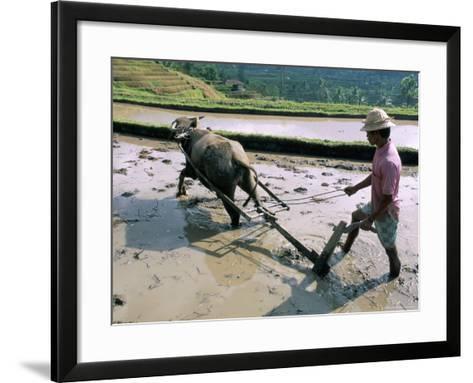 Farmer Ploughing Flooded Rice Field, Central Area, Island of Bali, Indonesia, Southeast Asia-Bruno Morandi-Framed Art Print