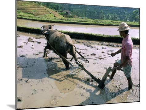 Farmer Ploughing Flooded Rice Field, Central Area, Island of Bali, Indonesia, Southeast Asia-Bruno Morandi-Mounted Photographic Print