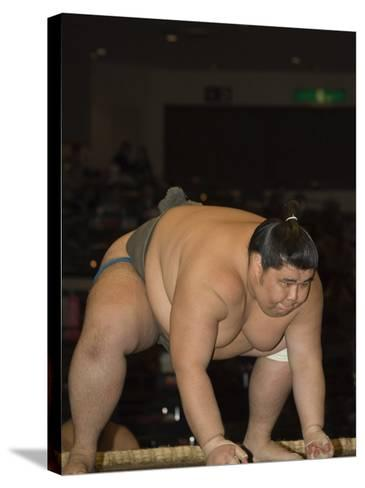 Sumo Wrestler Competing, Grand Taikai Sumo Wrestling Tournament, Kokugikan Hall Stadium, Tokyo-Christian Kober-Stretched Canvas Print
