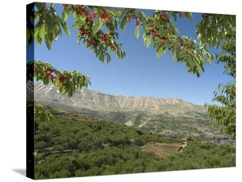 Cherry Tree, Bcharre, Qadisha Valley, Unesco World Heritage Site, North Lebanon, Middle East-Christian Kober-Stretched Canvas Print