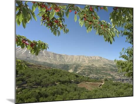 Cherry Tree, Bcharre, Qadisha Valley, Unesco World Heritage Site, North Lebanon, Middle East-Christian Kober-Mounted Photographic Print