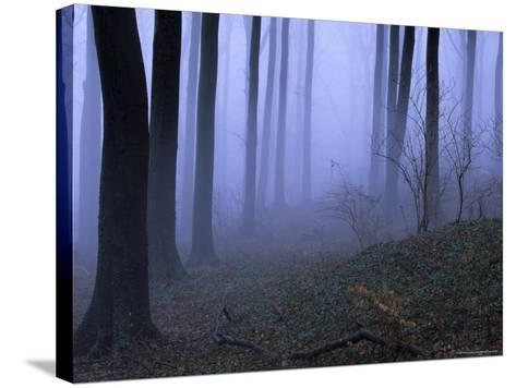 Forest in the Fog, Bielefeld, Germany-Thorsten Milse-Stretched Canvas Print