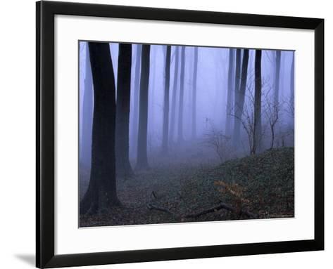 Forest in the Fog, Bielefeld, Germany-Thorsten Milse-Framed Art Print