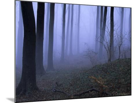 Forest in the Fog, Bielefeld, Germany-Thorsten Milse-Mounted Photographic Print