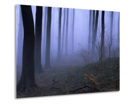 Forest in the Fog, Bielefeld, Germany-Thorsten Milse-Metal Print