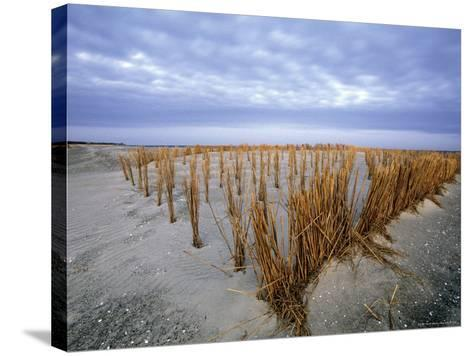 Beach in the Early Morning, Darss, Mecklenburg-Vorpommern, Germany-Thorsten Milse-Stretched Canvas Print