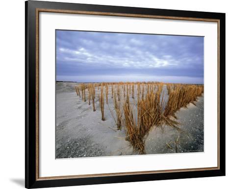 Beach in the Early Morning, Darss, Mecklenburg-Vorpommern, Germany-Thorsten Milse-Framed Art Print