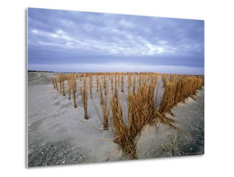 Beach in the Early Morning, Darss, Mecklenburg-Vorpommern, Germany-Thorsten Milse-Metal Print