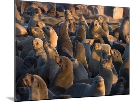 South African Fur Seals, Arcotocephalus Pusillus, Cape Cross, Namibia, Africa-Thorsten Milse-Mounted Photographic Print