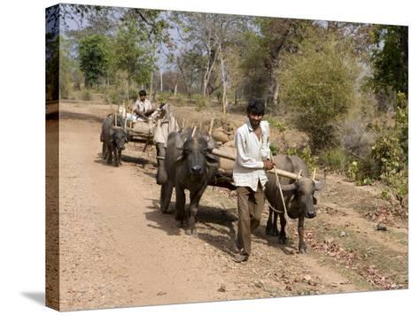 Bullock Carts, Tala, Bandhavgarh National Park, Madhya Pradesh, India-Thorsten Milse-Stretched Canvas Print