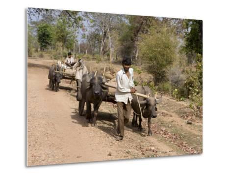 Bullock Carts, Tala, Bandhavgarh National Park, Madhya Pradesh, India-Thorsten Milse-Metal Print