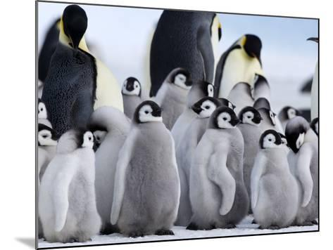 Colony of Emperor Penguins and Chicks, Snow Hill Island, Weddell Sea, Antarctica-Thorsten Milse-Mounted Photographic Print