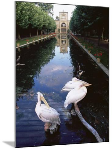 Wilhelma Zoo and Botanical Gardens, Stuttgart, Baden Wurttemberg, Germany-Yadid Levy-Mounted Photographic Print