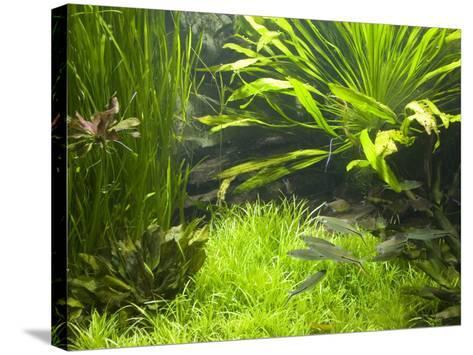Fish Aquarium at Wilhelma Zoo and Botanical Gardens, Stuttgart, Baden Wurttemberg, Germany-Yadid Levy-Stretched Canvas Print