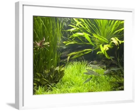 Fish Aquarium at Wilhelma Zoo and Botanical Gardens, Stuttgart, Baden Wurttemberg, Germany-Yadid Levy-Framed Art Print