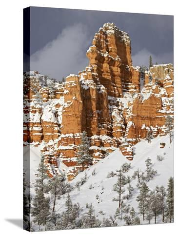 Red Rock Formations, Red Canyon, Dixie National Forest, Utah, USA-James Hager-Stretched Canvas Print
