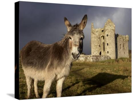 A Donkey Grazes in Front 17th Century Monea Castle, County Fermanagh, Ulster, Northern Ireland-Andrew Mcconnell-Stretched Canvas Print