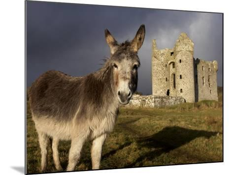 A Donkey Grazes in Front 17th Century Monea Castle, County Fermanagh, Ulster, Northern Ireland-Andrew Mcconnell-Mounted Photographic Print