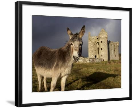 A Donkey Grazes in Front 17th Century Monea Castle, County Fermanagh, Ulster, Northern Ireland-Andrew Mcconnell-Framed Art Print