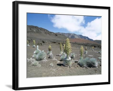 Silverswords, Growing in Vast Crater of Haleakala, Maui-Robert Francis-Framed Art Print