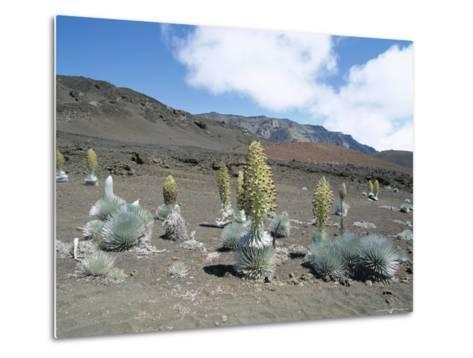 Silverswords, Growing in Vast Crater of Haleakala, Maui-Robert Francis-Metal Print