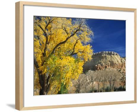 Cottonwood, Rio Arriba County, New Mexico, USA-Michael Snell-Framed Art Print