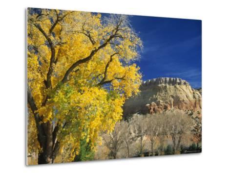 Cottonwood, Rio Arriba County, New Mexico, USA-Michael Snell-Metal Print