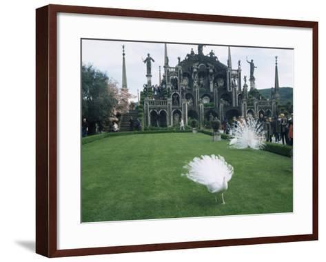 White Peacocks in Front of Folly, Isola Bella, Lake Maggiore, Piedmont, Italy-Sheila Terry-Framed Art Print