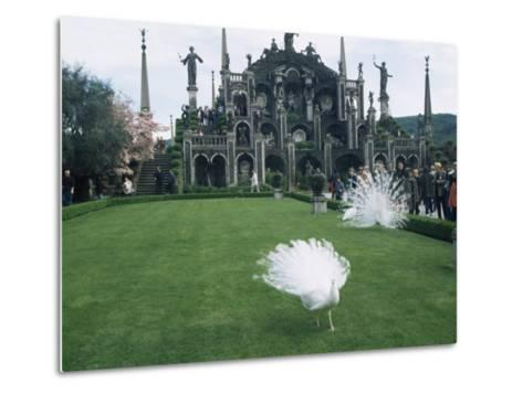 White Peacocks in Front of Folly, Isola Bella, Lake Maggiore, Piedmont, Italy-Sheila Terry-Metal Print