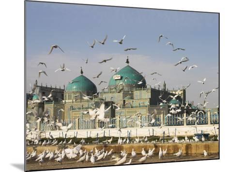 The Famous White Pigeons, Shrine of Hazrat Ali, Mazar-I-Sharif, Balkh Province, Afghanistan-Jane Sweeney-Mounted Photographic Print