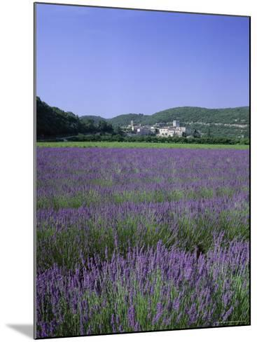 Lavender Fields and the Village of Montclus, Gard, Languedoc-Roussillon, France-Ruth Tomlinson-Mounted Photographic Print