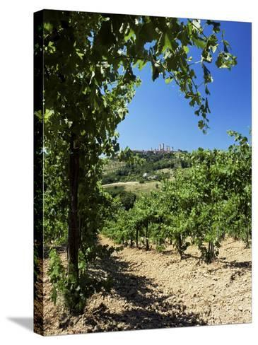 View from Vineyard of the Town of San Gimignano, Tuscany, Italy-Ruth Tomlinson-Stretched Canvas Print