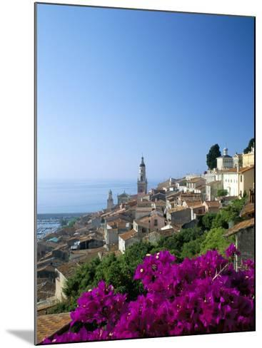 Bougainvillea in Flower, Menton, Alpes-Maritimtes, Cote d'Azur, Provence, French Riviera, France-Ruth Tomlinson-Mounted Photographic Print