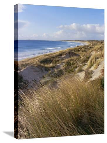 Northern Beach, Chatham Islands Islands-Julia Thorne-Stretched Canvas Print