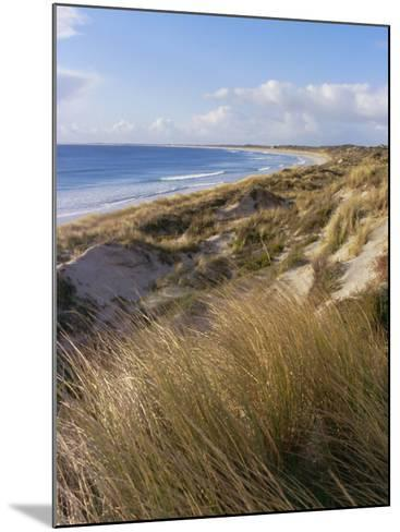 Northern Beach, Chatham Islands Islands-Julia Thorne-Mounted Photographic Print