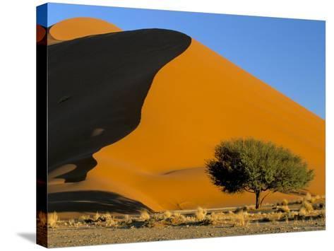 Sand Dune, Sossusvlei Dune Field, Namib-Naukluft Park, Namib Desert, Namibia, Africa-Steve & Ann Toon-Stretched Canvas Print